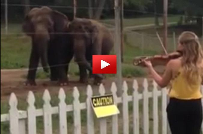 Can Elephants Feel Music?